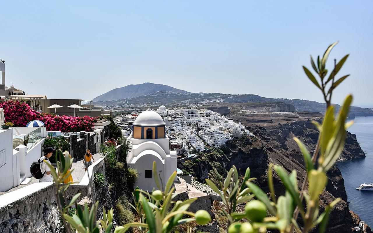 Fira Santorini Olivenstrauch