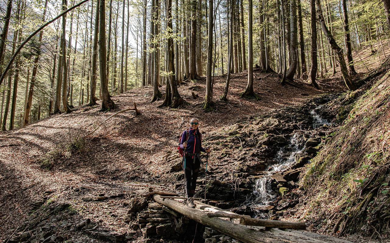 Waldweg-Hoher-Zinken-Wanderung