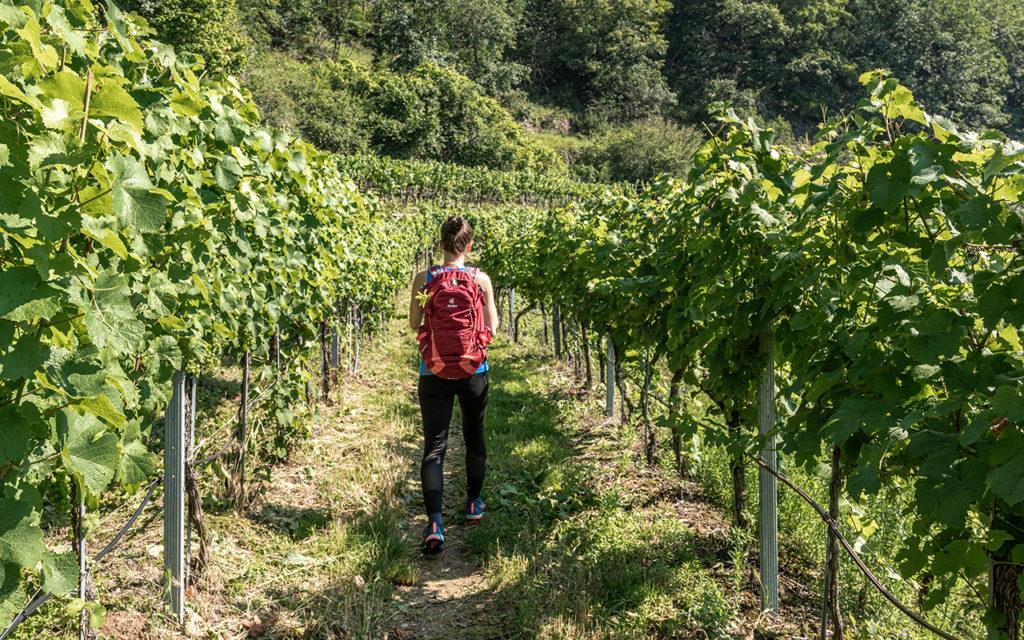 Wanderweg-durch-Wein