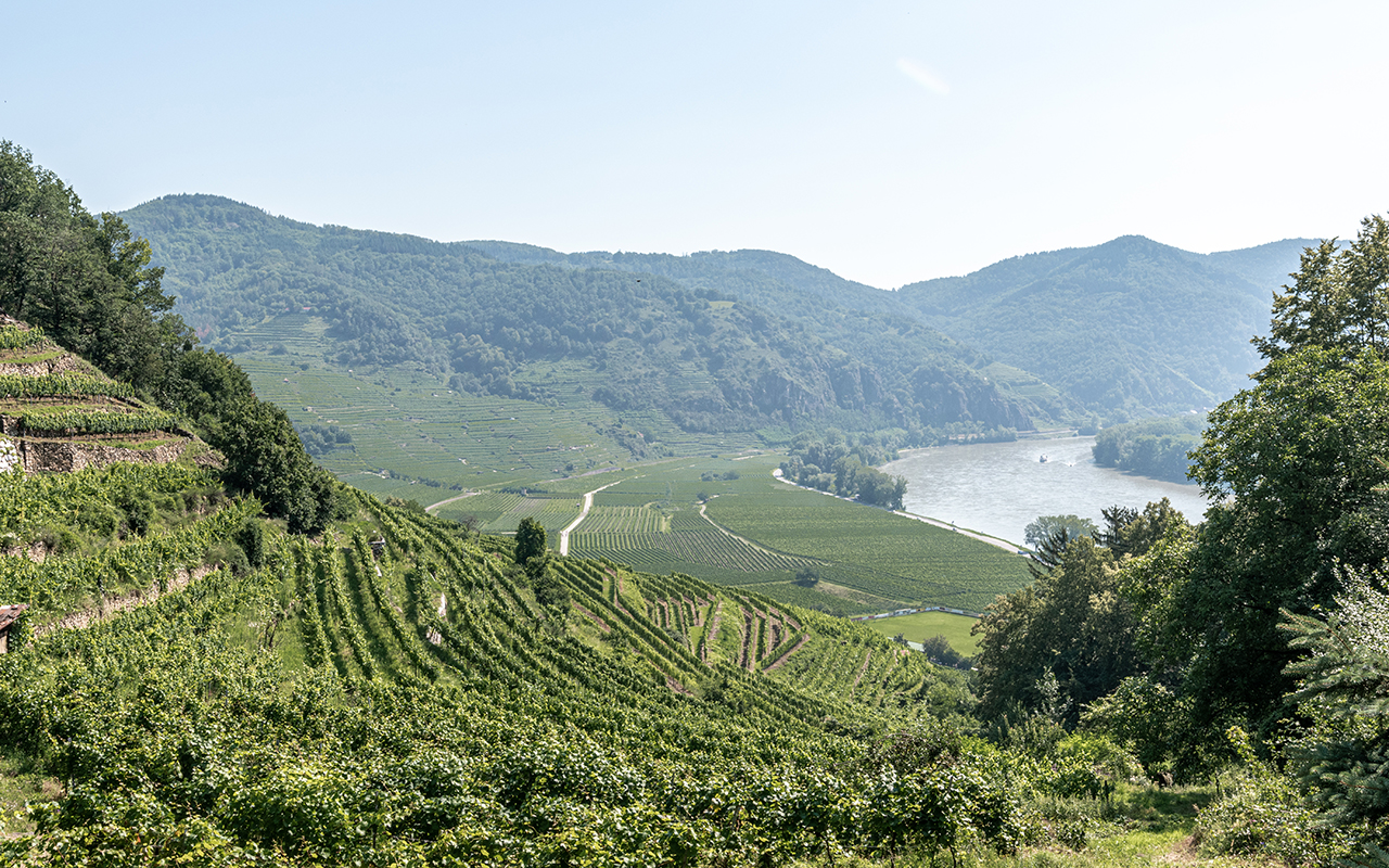 Weinterrassen-Wachau