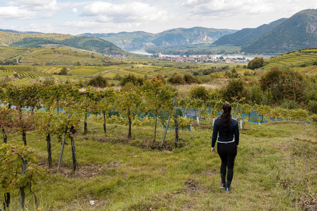 Wandern-durch-die-Weinberge